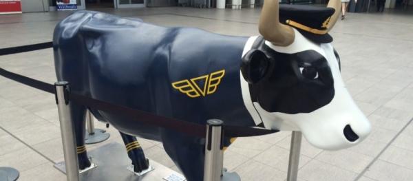 amoolia earhart cow