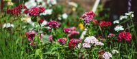 Balcombe Gardens Open Garden