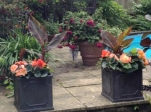 Holly House Open Garden for St Catherine's Hospice