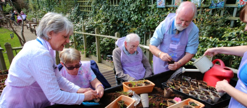 planting at a vegetable trug in garden